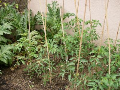 Alcachofas, tomates............mi huerto se ha vuelto loco.